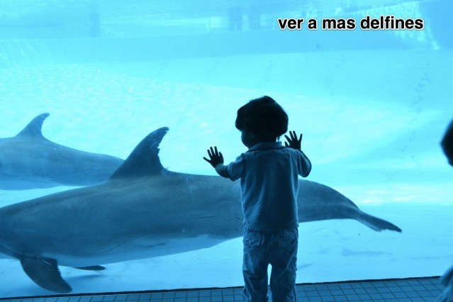 carlos15_6
