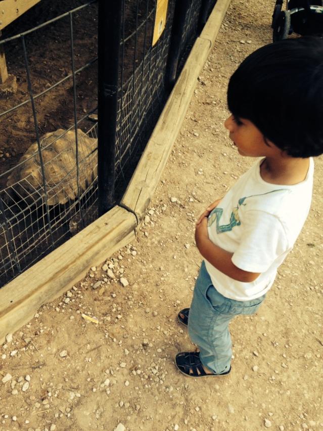 zoo314